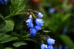 Цветки фото голубые, Стоковое Фото