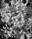 Цветки фото дерева уникального черно-белого стоковая фотография