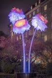 Цветки Хельсингборга Dromljus Стоковые Изображения RF