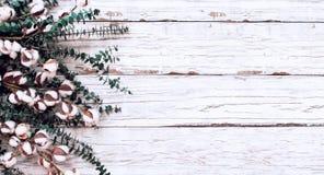 Цветки хлопка и ветви эвкалипта над белым деревянным фоном текстуры стоковое изображение
