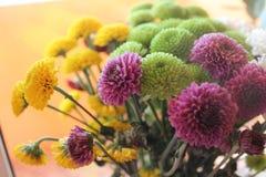 Цветки: хризантемы Время осени Стоковые Фотографии RF