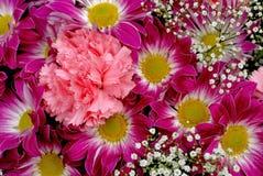 Цветки хризантемы и гвоздики Стоковые Изображения RF