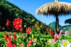 Цветки хризантемы на предпосылке горного вида Angkhang Стоковое Изображение RF