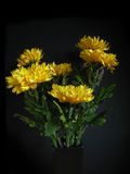 цветки хризантемы Стоковые Фотографии RF