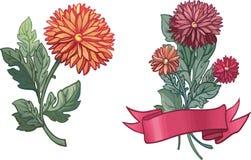 цветки хризантем Стоковое Изображение