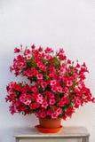 Цветки цвета Summery Стоковая Фотография RF