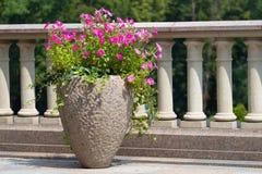 Цветки цветения в баке Стоковые Фотографии RF