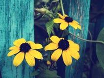 Цветки цветения с ретро влиянием фильтра Стоковая Фотография RF