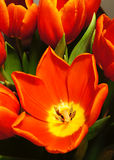 цветки цветеня цветастые Стоковые Изображения