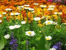 цветки цветеня цветастые Стоковая Фотография RF