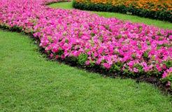 Цветки цветка и апельсина хорошего дизайна красивые розовые около зеленой травы в саде Стоковое Изображение RF