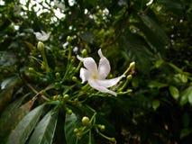 Цветки цветка Стоковая Фотография RF