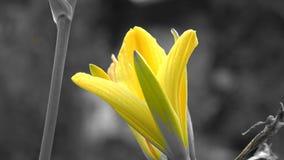 Цветки, цветковые растения, природа сток-видео