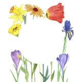 Цветки чертежа акварели Стоковое Фото