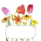 Цветки чертежа акварели Стоковое Изображение