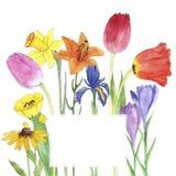 Цветки чертежа акварели Стоковое фото RF