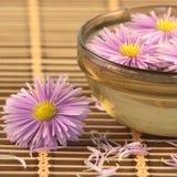 цветки шара Стоковые Фото