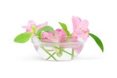 цветки шара Стоковое Фото