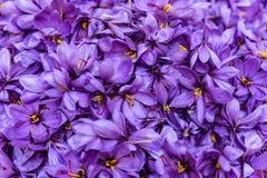 Цветки шафрана после собрания Стоковое Фото