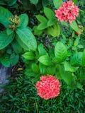 Цветки шипа Стоковое фото RF