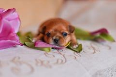 Цветки щенка стоковая фотография