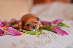 Цветки щенка стоковое фото