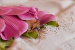 Цветки щенка стоковые фото