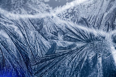 Цветки льда на стекле стоковая фотография