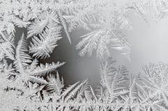 Цветки льда Стоковые Изображения