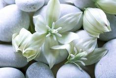 Цветки юкки Стоковое фото RF