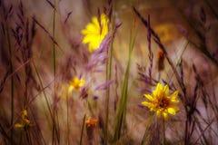 Цветки дюны Стоковые Изображения