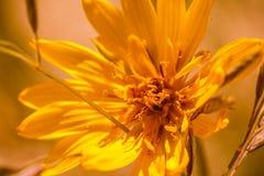Цветки дюны Стоковое Изображение RF