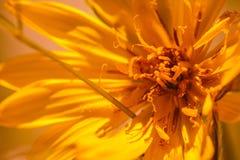Цветки дюны Стоковое Фото