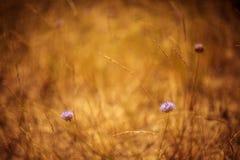 Цветки дюны Стоковые Фотографии RF