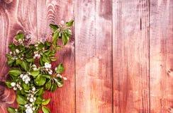 Цветки Яблока на деревянной предпосылке Стоковые Фотографии RF