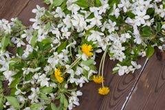 Цветки яблони на предпосылке темного деревянного стола стоковое изображение rf
