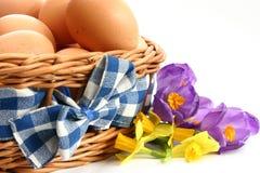 цветки яичек стоковые изображения rf