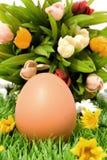 цветки яичка стоковые изображения rf