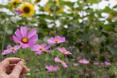 Цветки для предпосылки Стоковые Изображения RF
