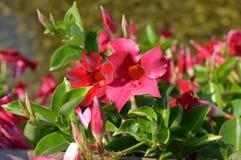 Цветки для садов Стоковое Изображение