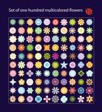 цветки 100 пестротканых одних Стоковое Изображение