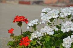Цветки 1 Стоковое фото RF