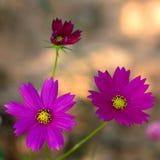 цветки 2 Стоковые Изображения