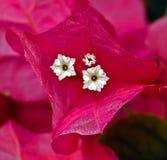 Цветки   Стоковое Изображение RF