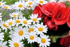 Цветки Стоковые Изображения