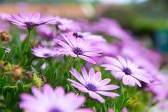 Цветки Стоковое Фото