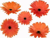 цветки Стоковое фото RF