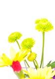 цветки Стоковая Фотография RF