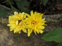 цветки 2 Стоковая Фотография RF