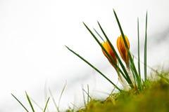 цветки 2 стоковые фотографии rf